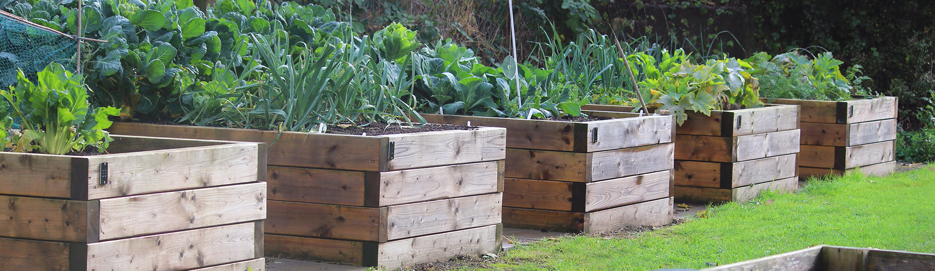 Photo showing an allotment vegetable garden with a row of homemade, wooden raised beds many with thick, heavy duty, treated tanalised timber. The raised beds are being used to grow salad vegetables, courgettes, herbs and potatoes, being easy to maintain without the need to bend over, and therefore particularly suitable for disable gardeners and seniors. Containers such as these simple raised beds can be attractive, making a vegetable garden organised, neat and tidy. Also in the picture is a green plastic water butt and wooden compost heap.